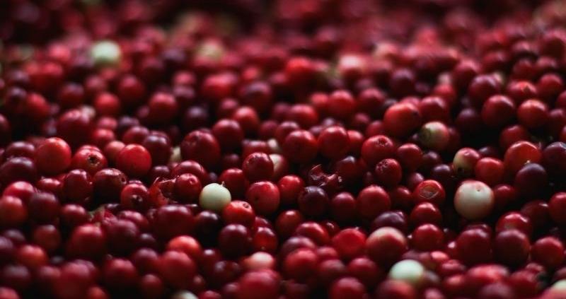 Deiters-arandano-rojo