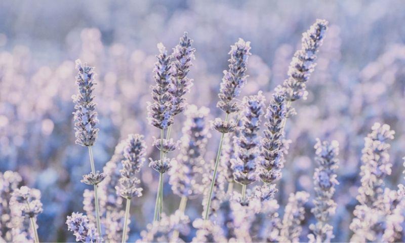 Deiters-plantas-medicinales1