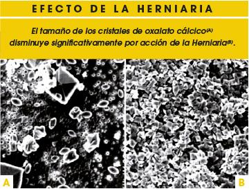 Efecto de la herniaria