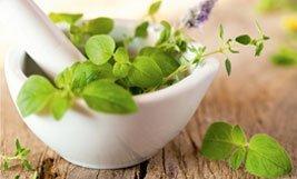 Plantas medicinales para proteger tu salud